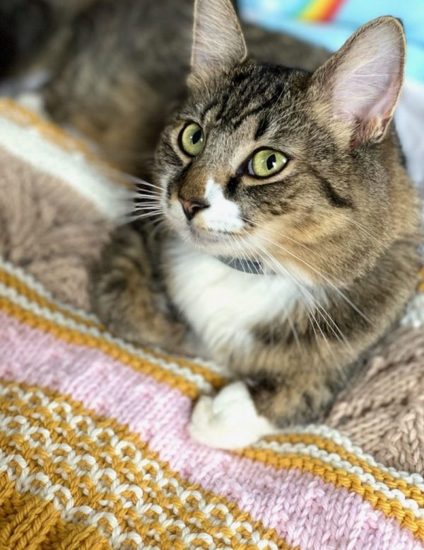 Sharon the cat on the glamping blanket